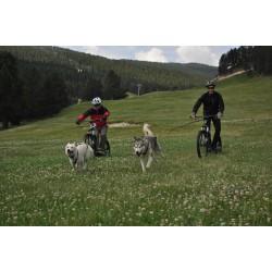 Excursió en patinet tibat per gossos