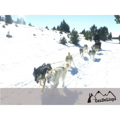 Be a musher for one day. Adventure Circuit