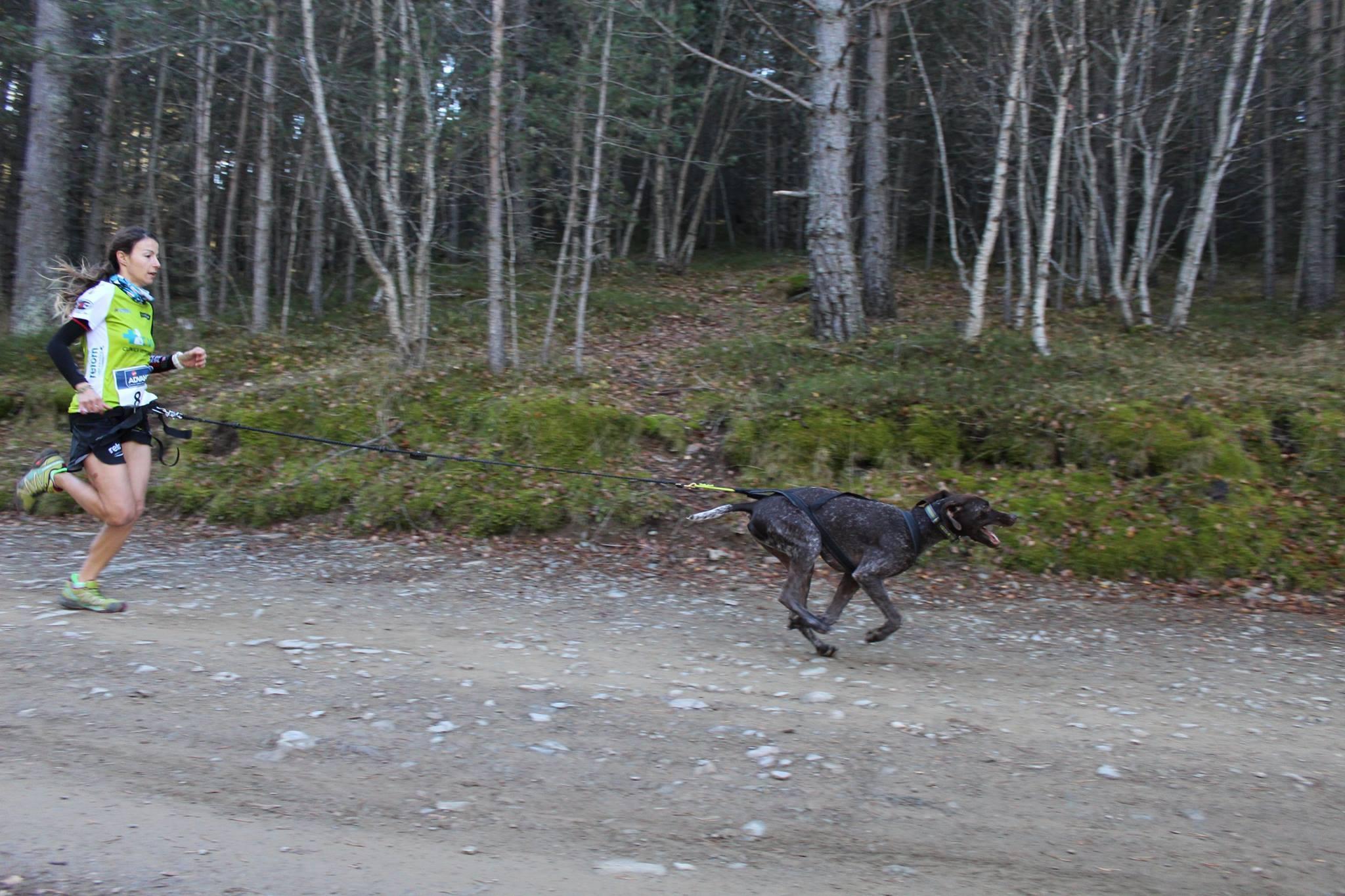 correr con tu perro incluso en verano