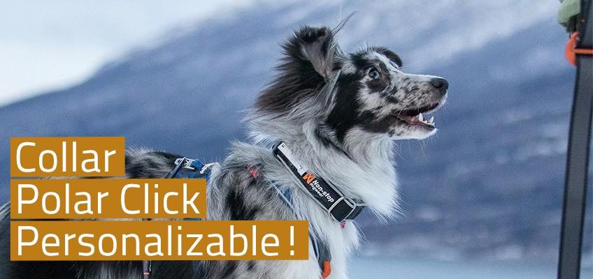 Collar Polar Click Personalizable!