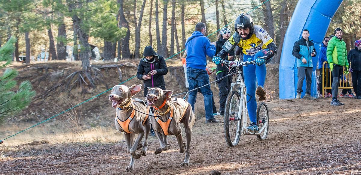 En Dogathlon trobaràs les millors marques per a la pràctica del DogScooter